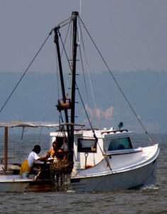 Watermen aboard the Senora work the James River for oysters on Wednesday.